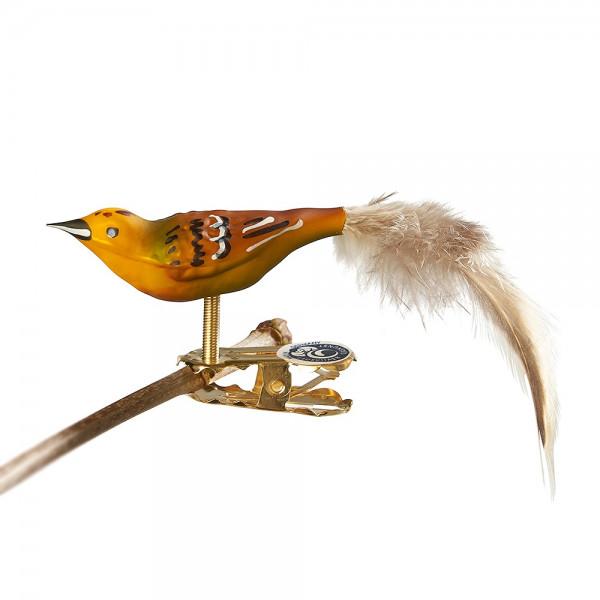 Glasvogel Mini-Goldammer, Naturfeder