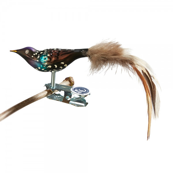 Glasvogel Mini-Star, Naturfeder