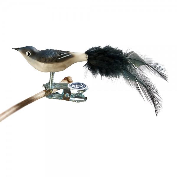 Glasvogel Mini-Mehlschwalbe, Naturfeder