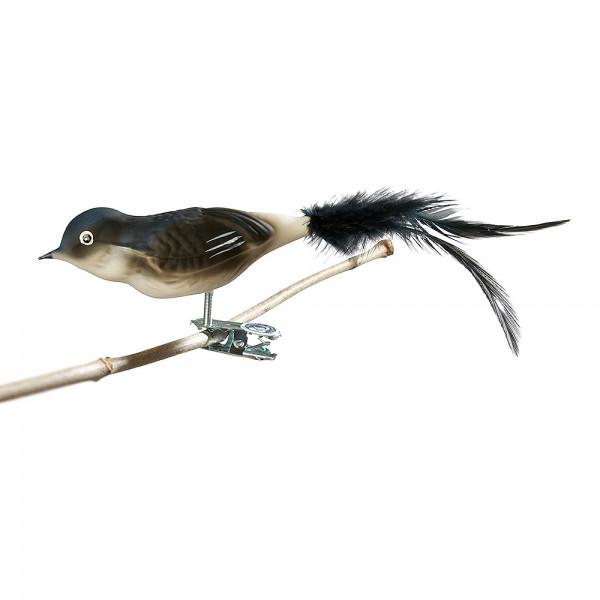 Glasvogel Mehlschwalbe, Naturfeder