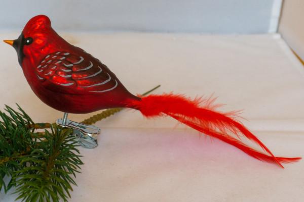 roter Kardinal, Naturfeder