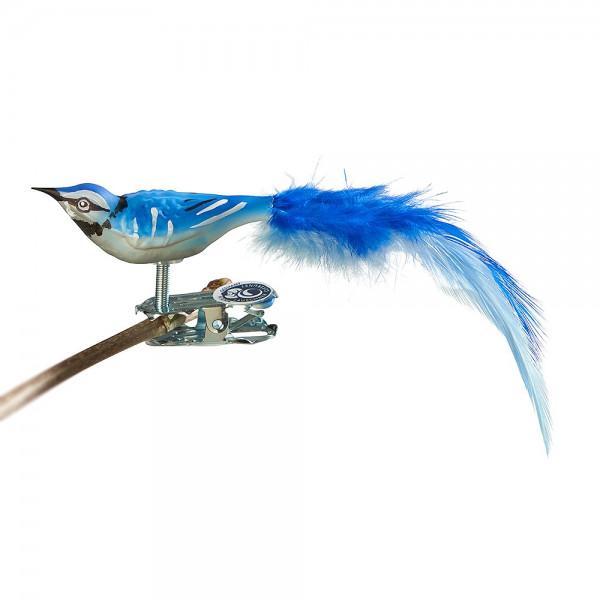 Mini-Blauhäher, Naturfeder